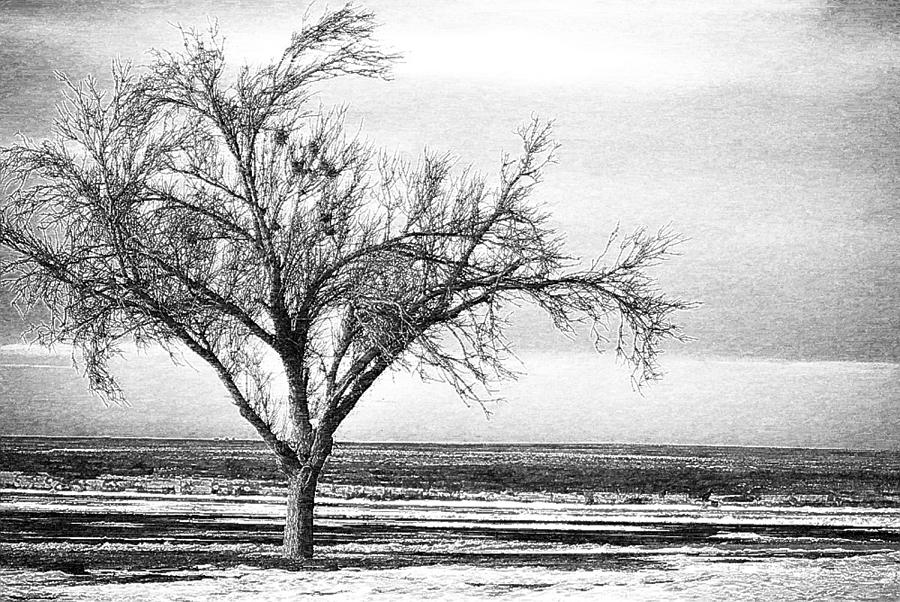 lonely-tree-pencil-john-cullum